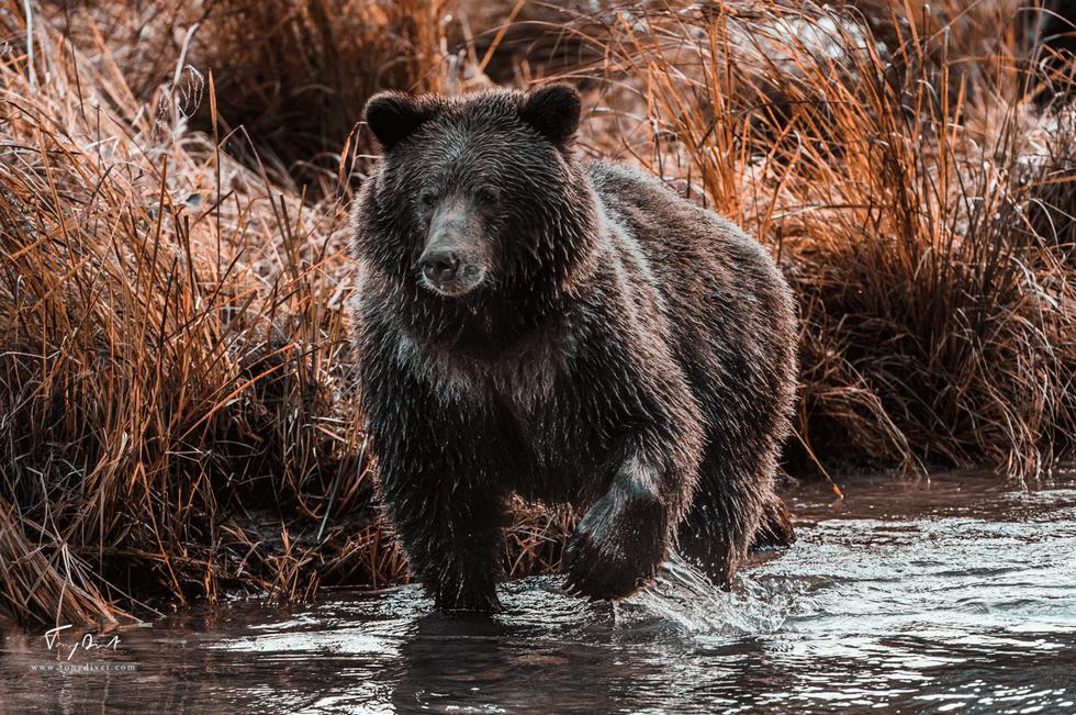 Alaska-5287.png