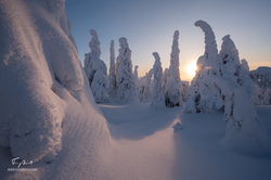 Laponie-3591