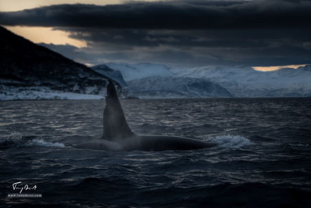 Orca-0750.png