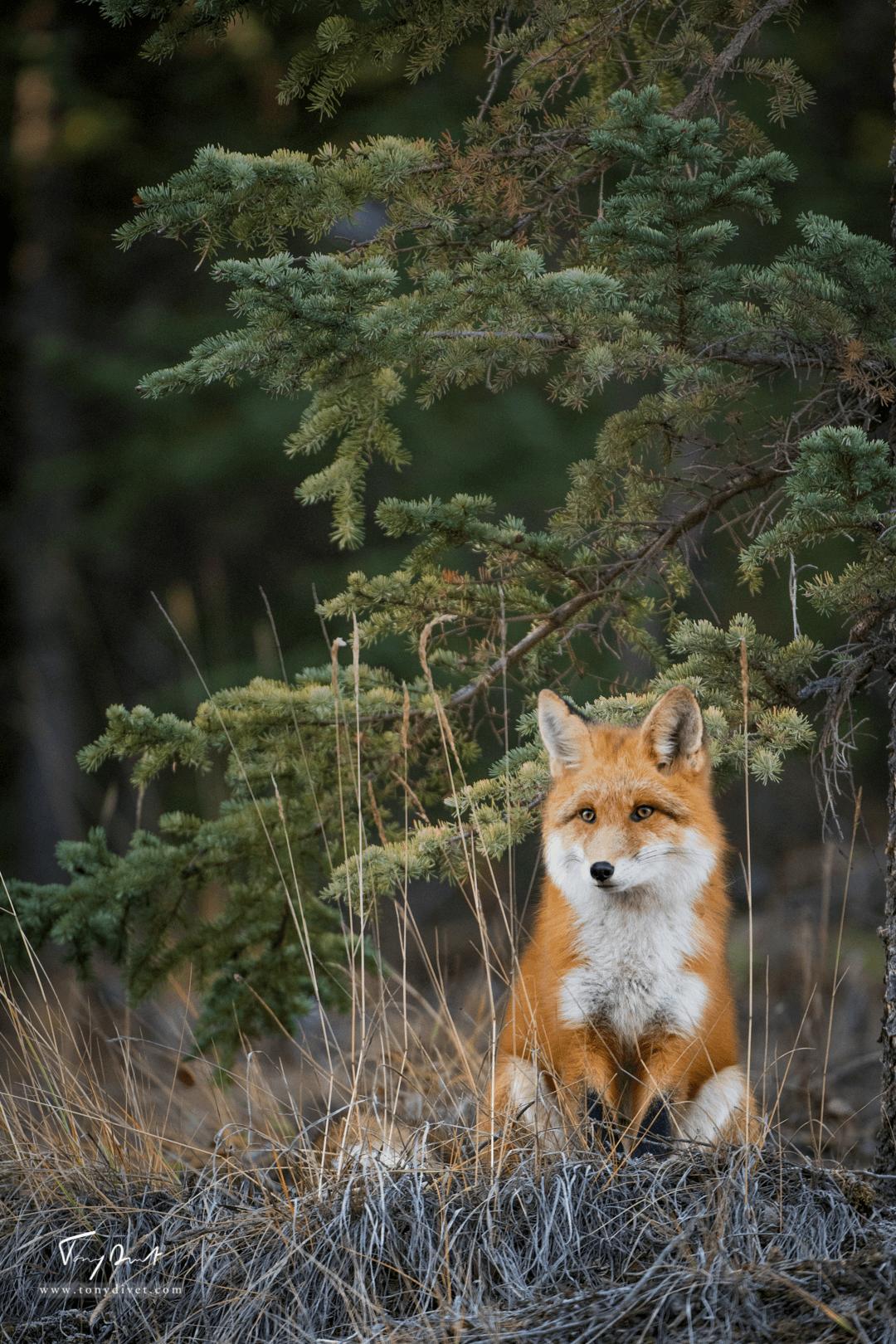Canada-7419