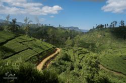 Sri-Lanka-03306