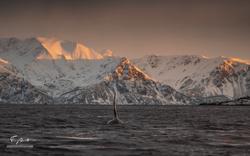 Orca-1258