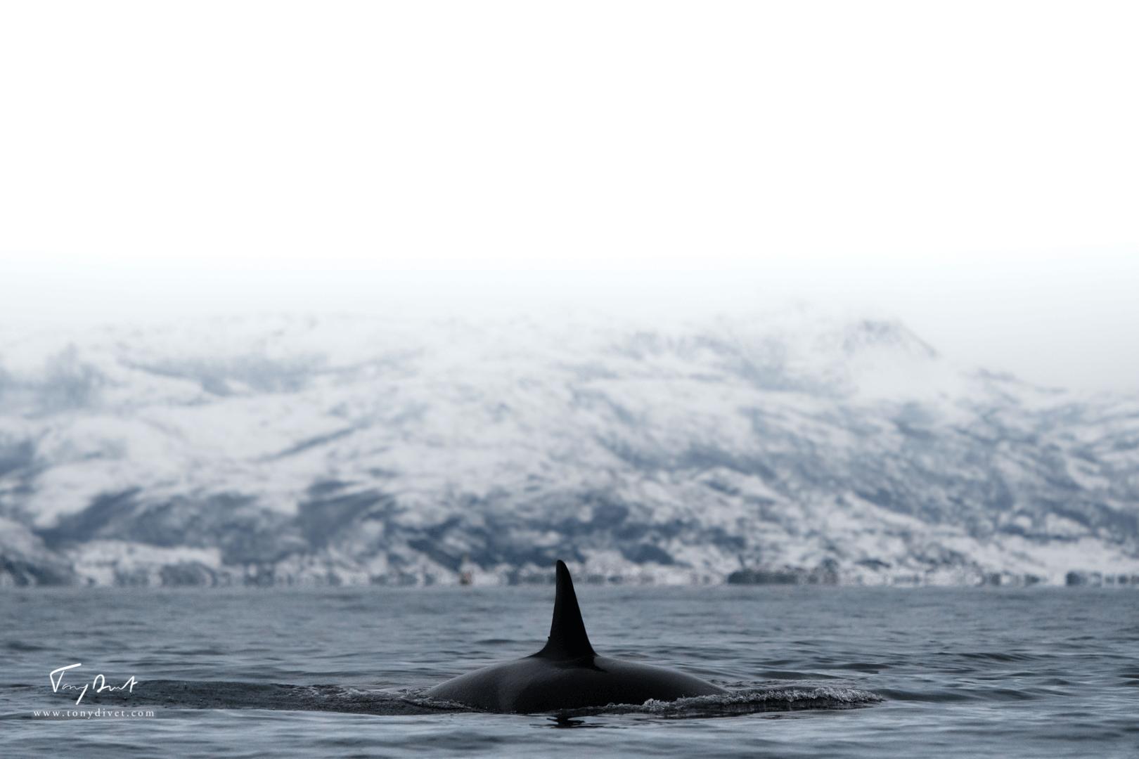 Orca-9213