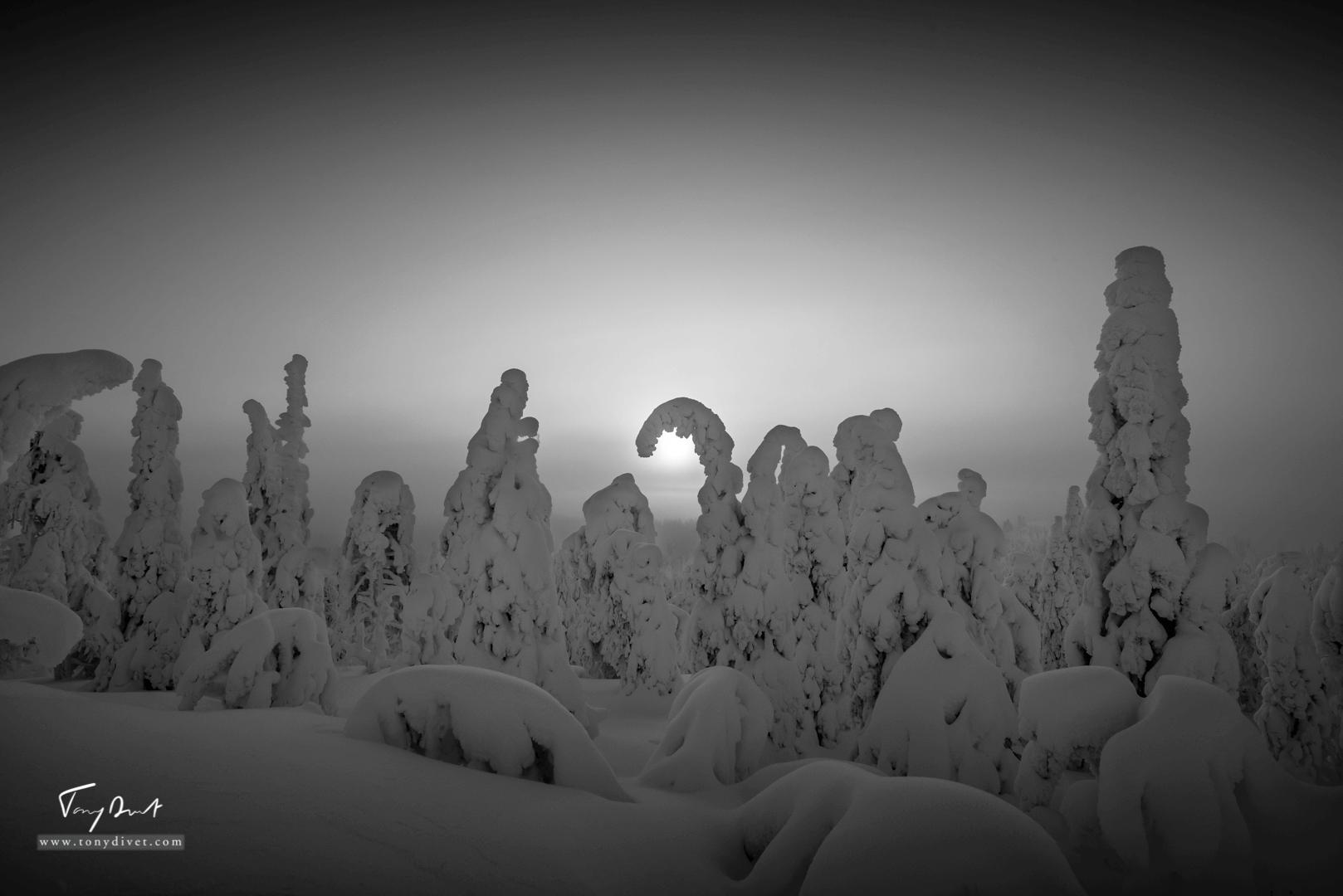 Laponie-3575