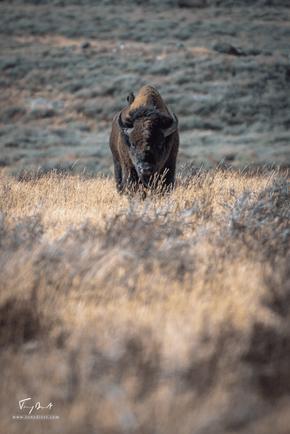 Yellowstone-1688.png