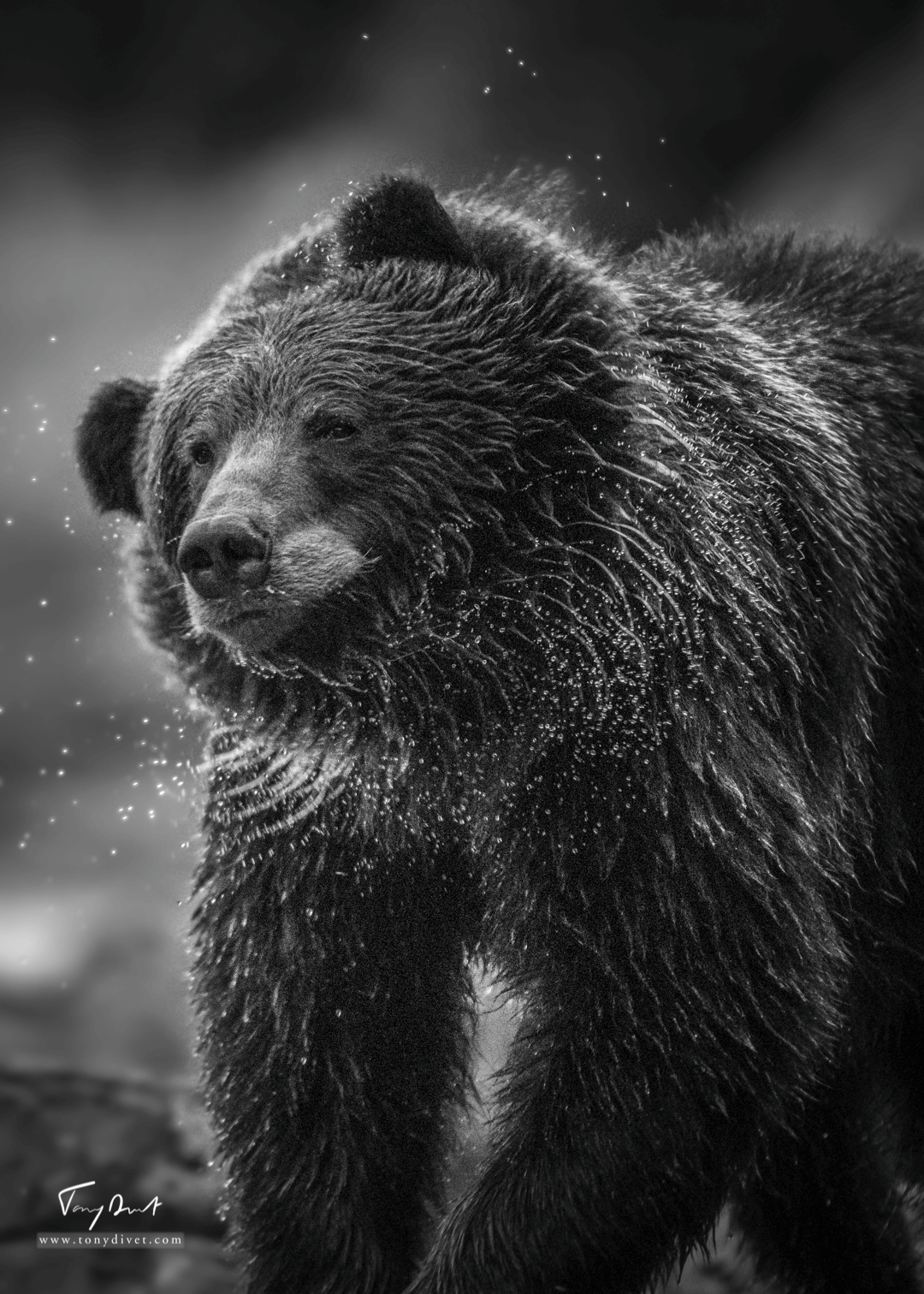 Alaska-5585