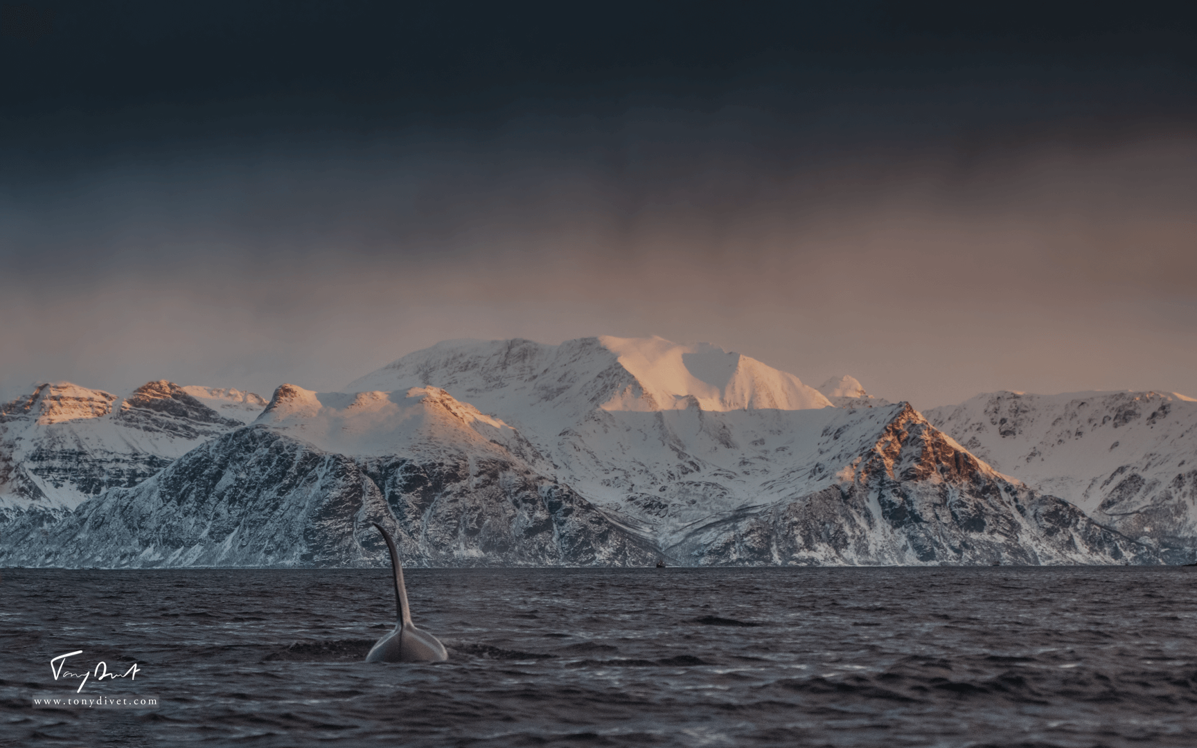 Orca-1275
