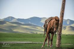 Mongolie-0080
