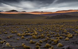 Chili-3740
