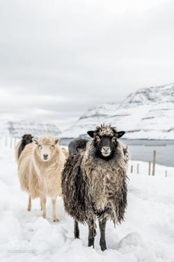 Faroe Islands-3544