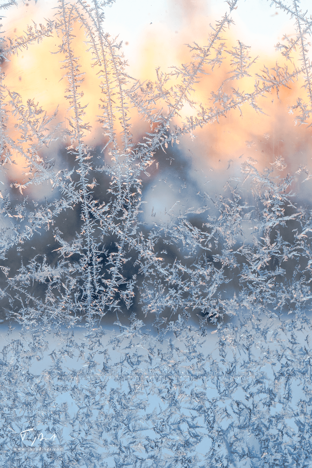 Laponie-3305