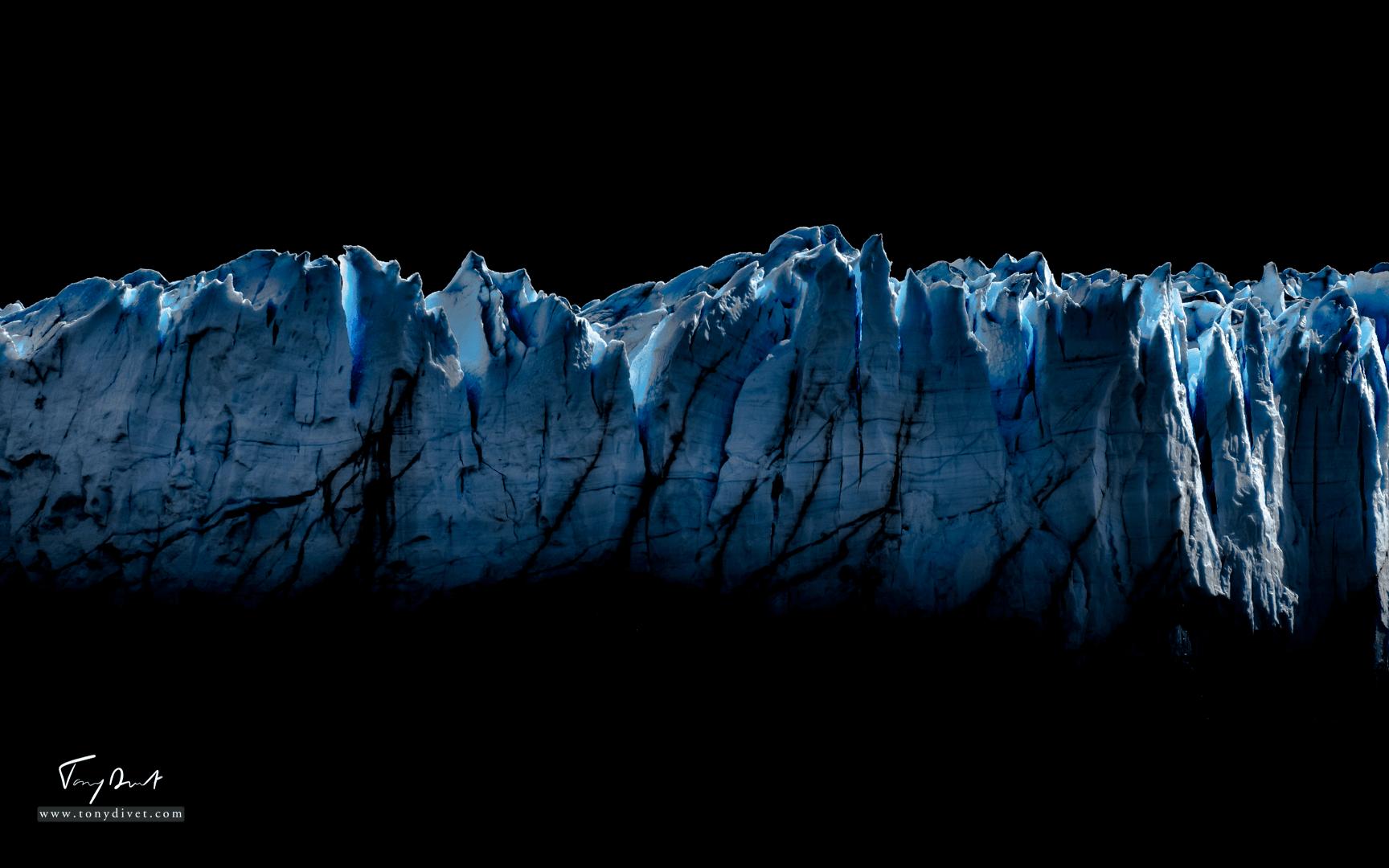 Argentine-1356