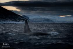 Orca-0750