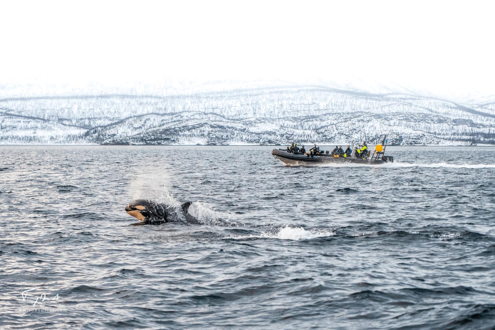 Orca-1648