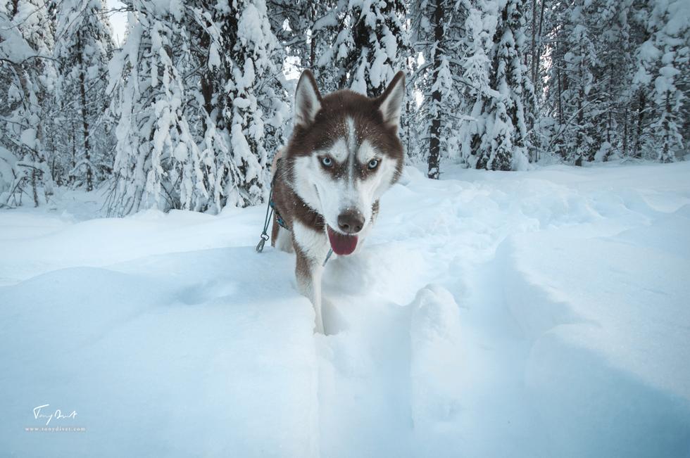 Laponie-3738.png