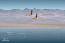Bolivie-5930