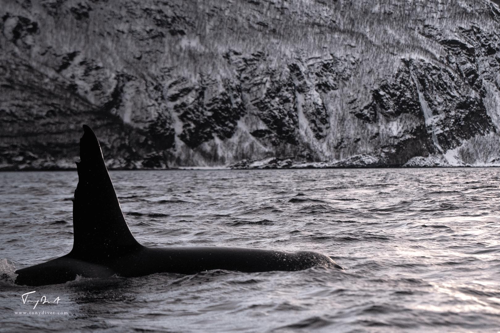 Orca-1095