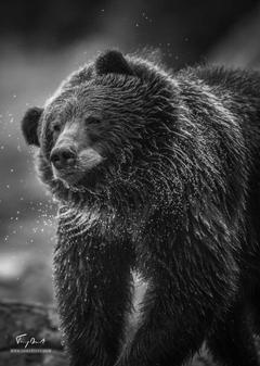 Alaska-5585.png