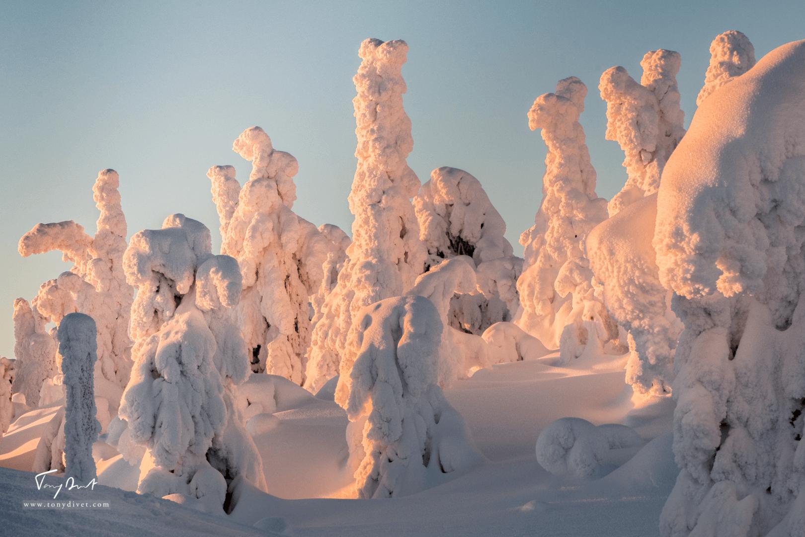 Laponie-4326