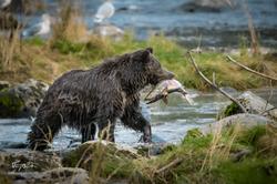 Alaska-5515
