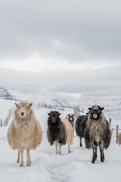 Faroe Islands-3512.png