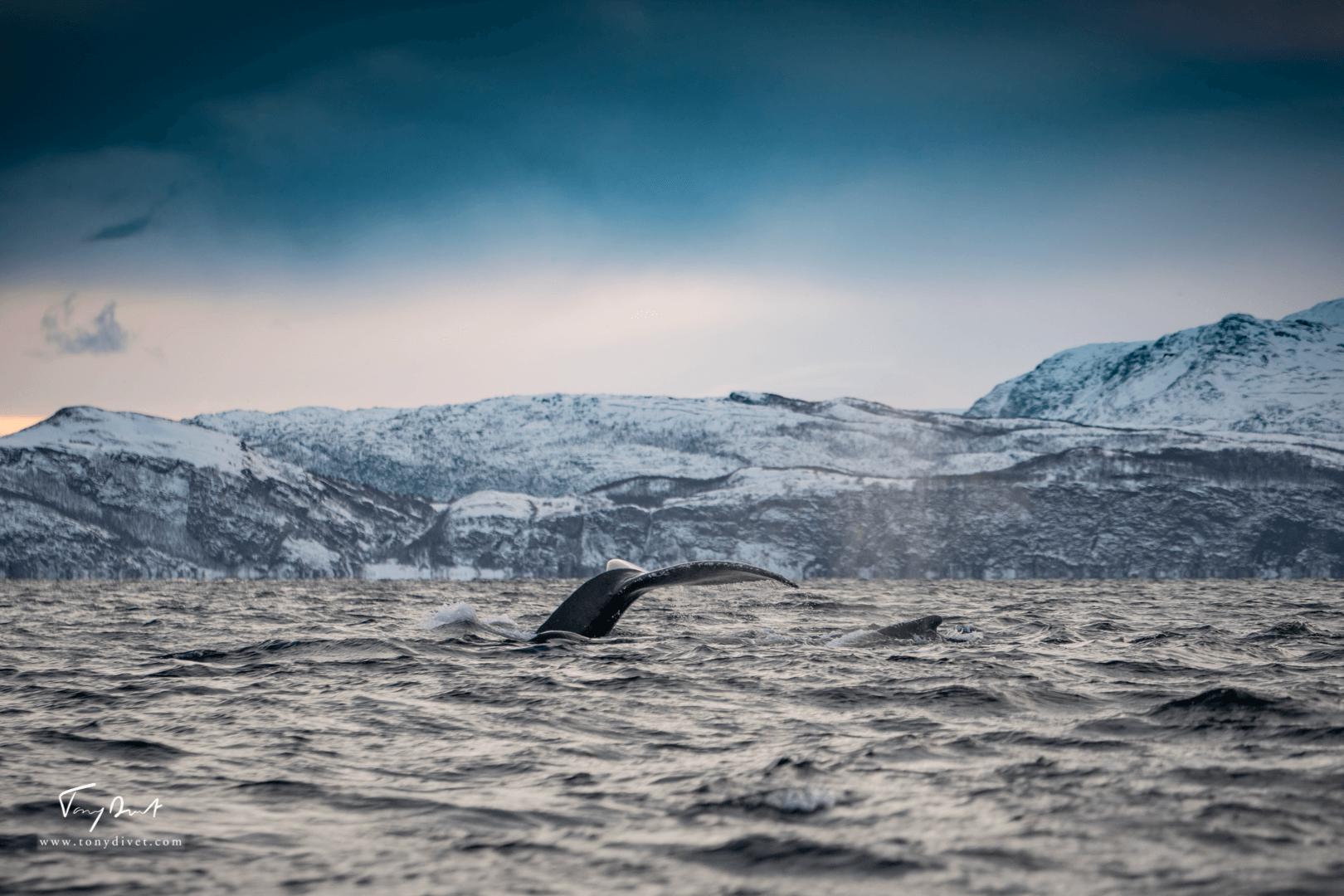 Orca-8519