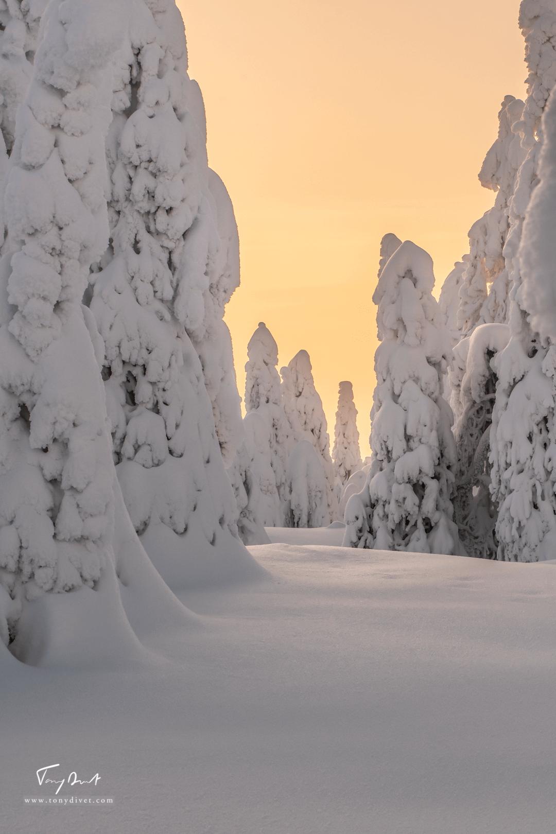Laponie-3