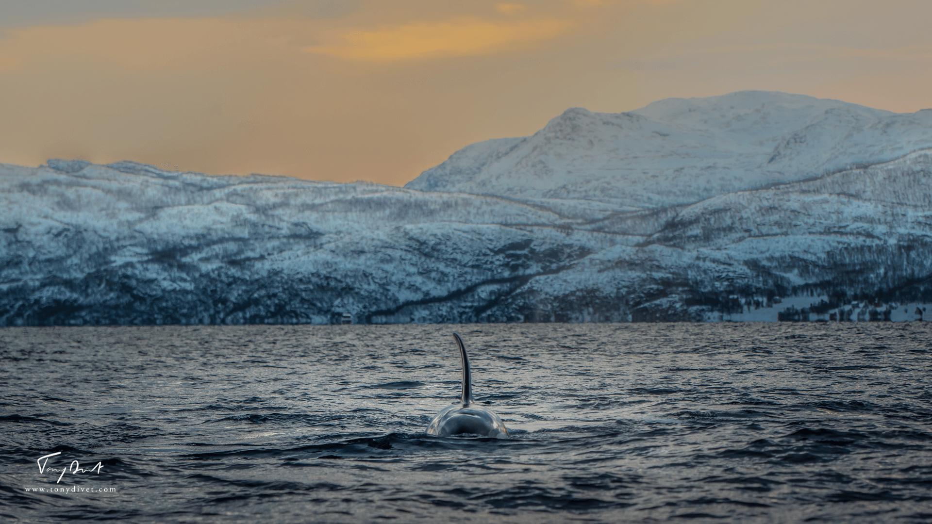 Orca-8048