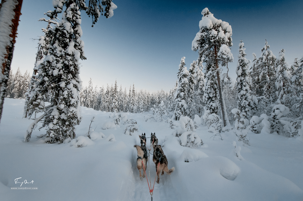 Laponie-3424.png