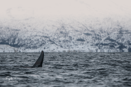 Orca-8984.png