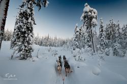 Laponie-3424
