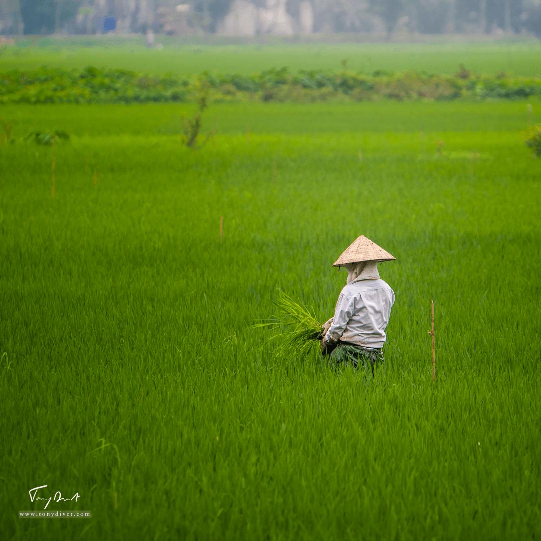 Vietnam-1816