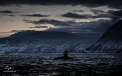 Orca-1467-2
