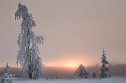 Laponie-2