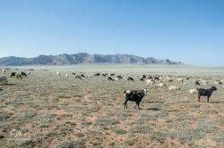 Mongolie-1132