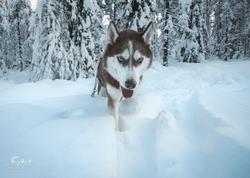 Laponie-3738