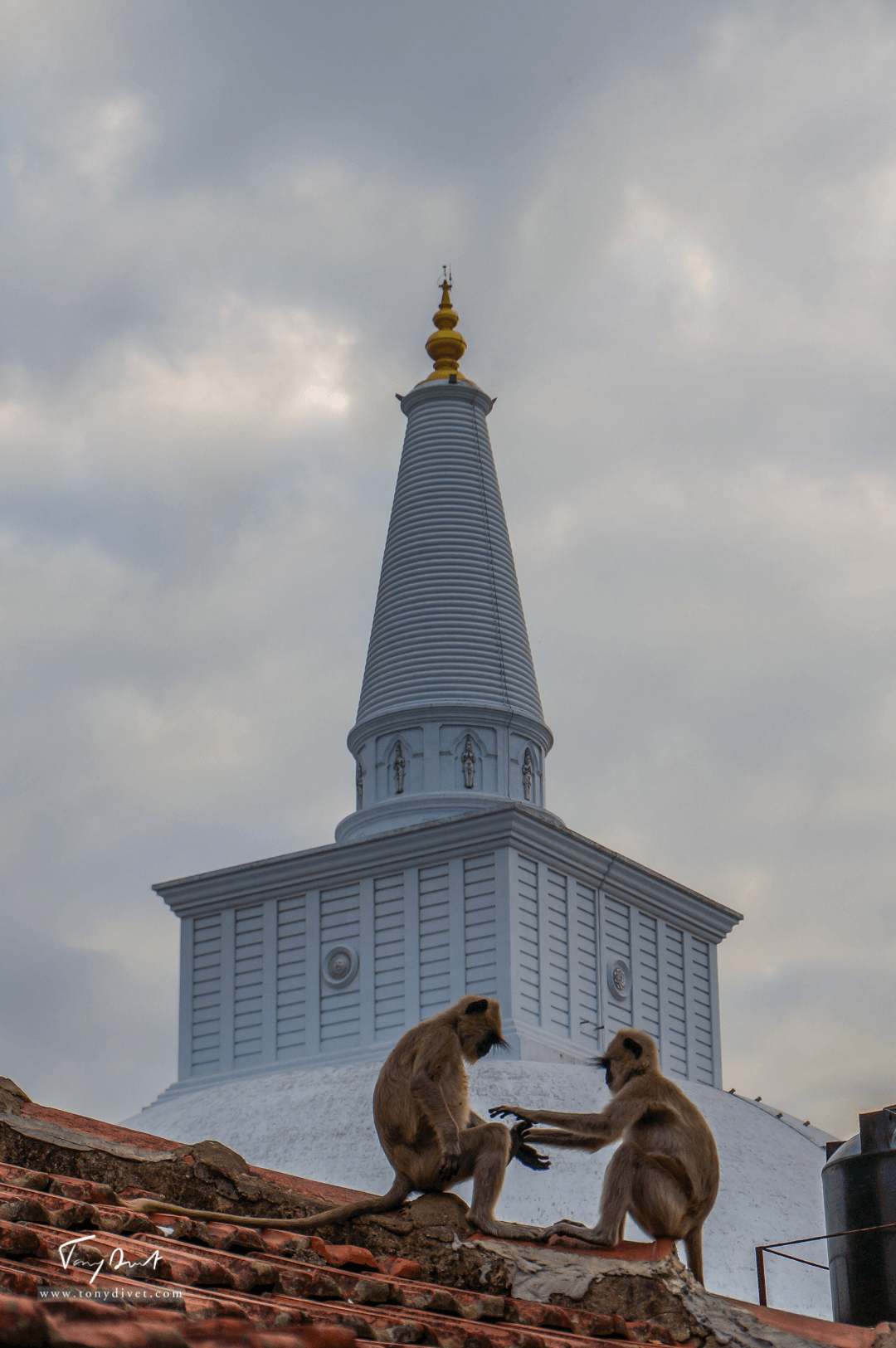 Sri-Lanka-01719