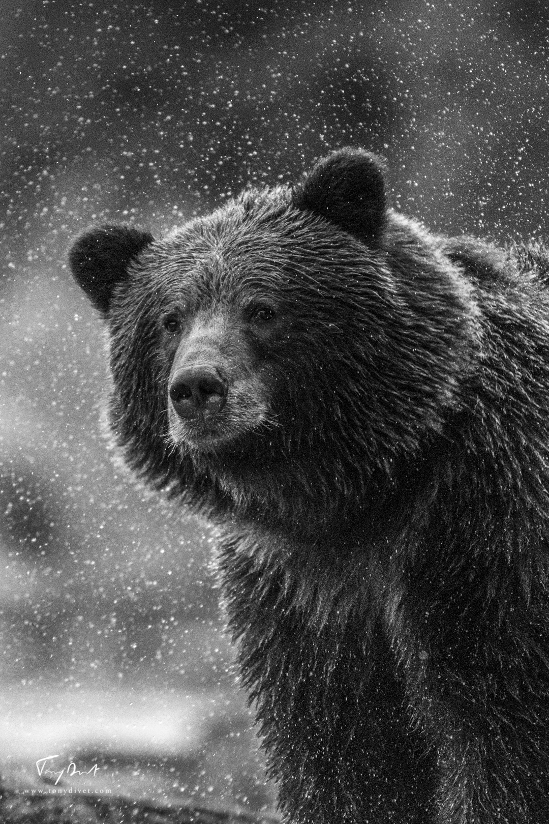 Alaska-5590