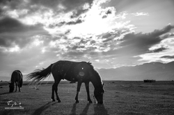 Mongolie-0054