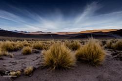 Chili-3752