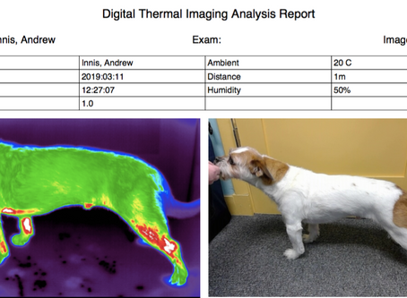 Using Heat and Photography to Localize Pain