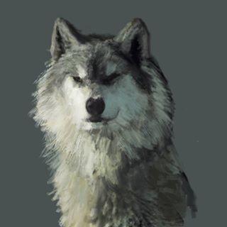 WOLF STUDY