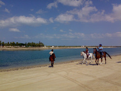 Trecking along the beach
