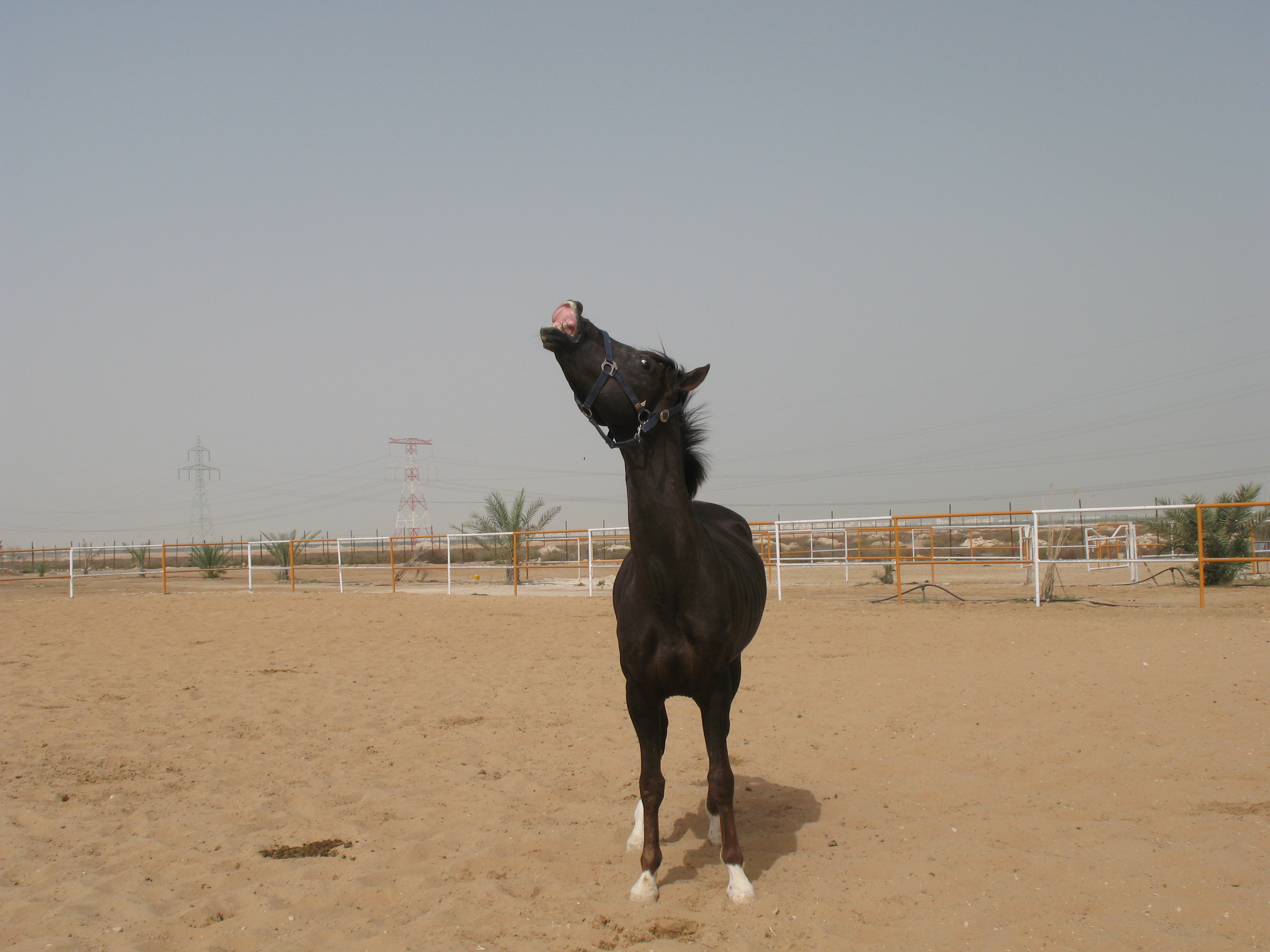 Wadnan Al Thani
