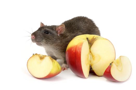 Small Animal - Treats & Forage