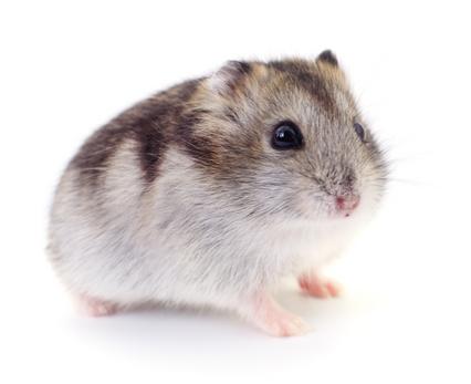 Small Animal - Toys & Chews