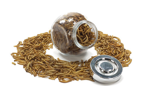 Dried Mealworms 50g