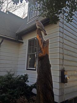 AM Sculptures- Hawk Stump