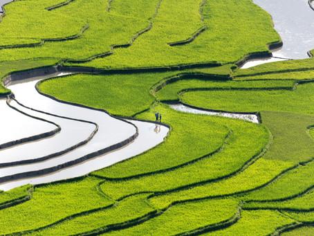 L'eau de riz présente bons nombres de bienfaits pour la peau et les cheveux.