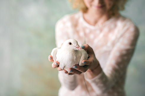 White dove in hands of a woman at a funeral and celebration of life.